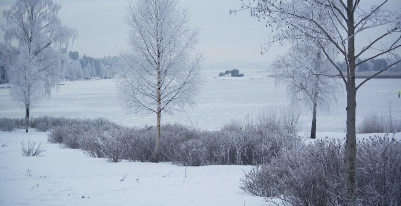 Koksabukta ligger 300 meter fra leiligheten. Om vinteren kan man gå helt til Kalvøya på isen.