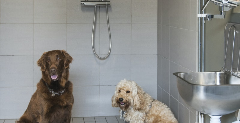 Felles vaske- og stellerom for hundeeiere etter tur i skog og mark