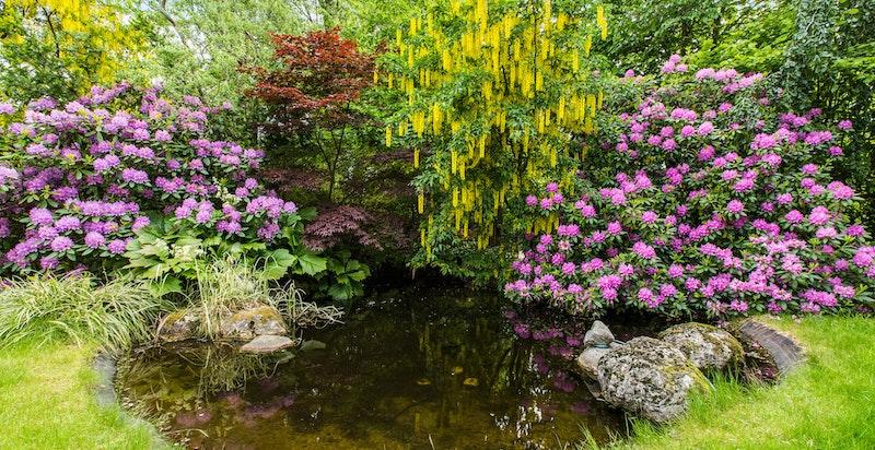 Vakker anlagt hage med dam