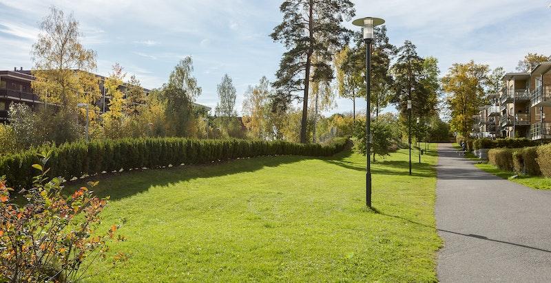 Grønne omgivelser i nabolaget.
