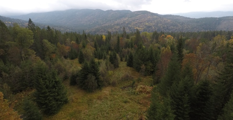 Lavfjellet - skogsområder