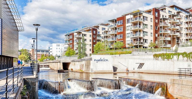 Nydalsdammen, som er en del av Akerselven, er et populært sted å oppsøke på solrike dager for bading.