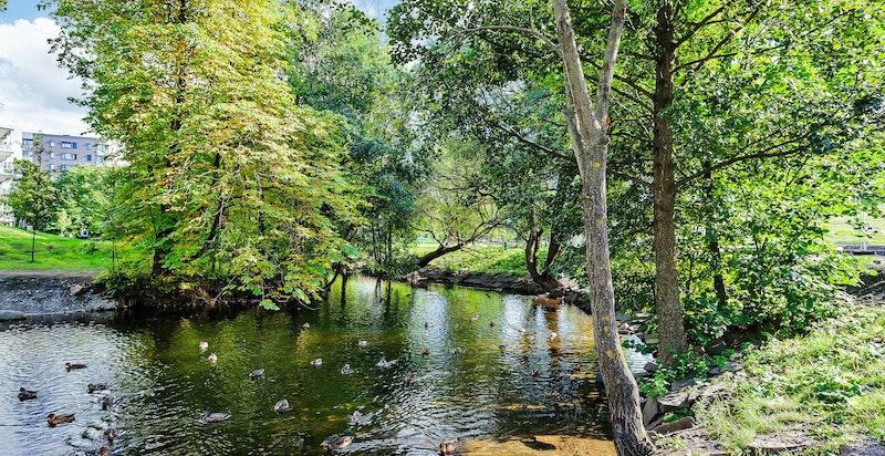 Med Akerselva like nedenfor ligger mye til rette for idylliske boforhold i grønne og rolige omgivelser.