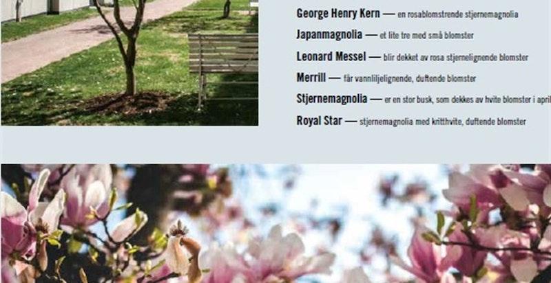 Vi lager Norges første magnoliapark, som blir prikken over i'en i det flotte utomhusanlegget.