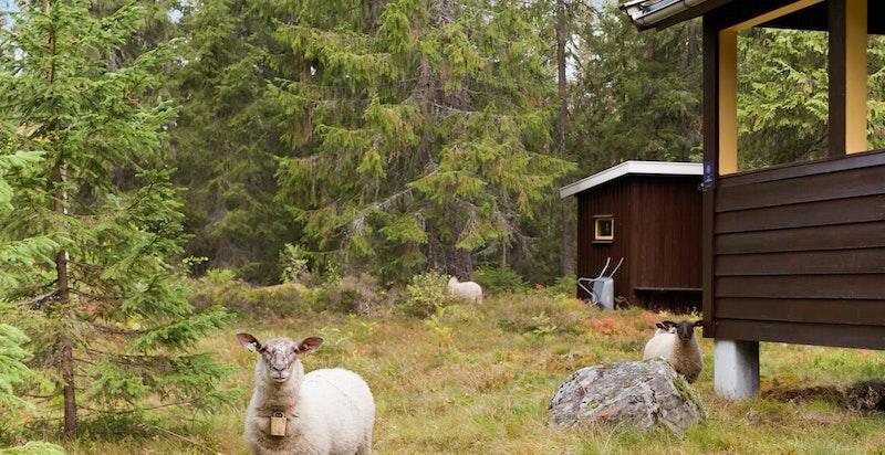 Naboene på besøk.