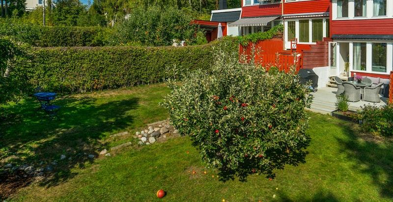 Barnevennlig hage med epletre