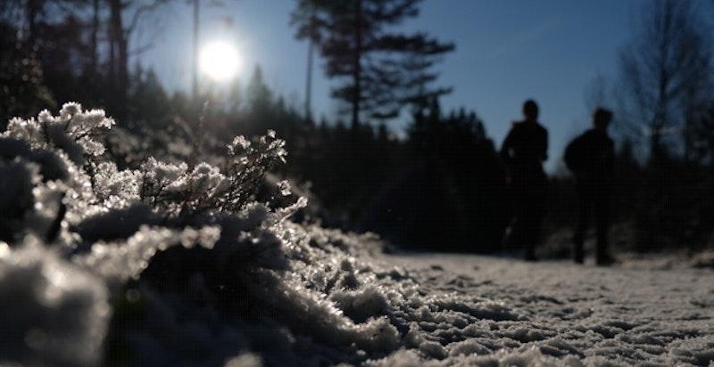 Området er et ypperlig utgangspunkt for rekreasjon med fantastisk flott oppkjørt skiløypenett