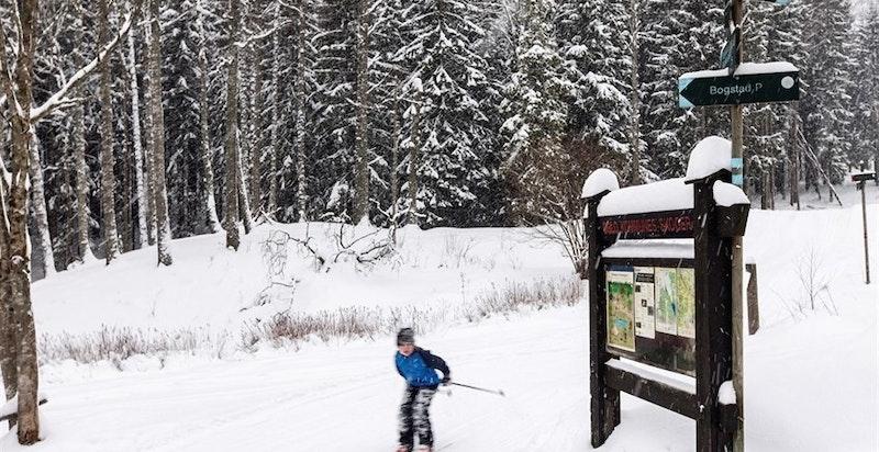 Vinterstid er det plenty med skiløyper i Merradalen og Sørkedalen - like utenfor leiligheten