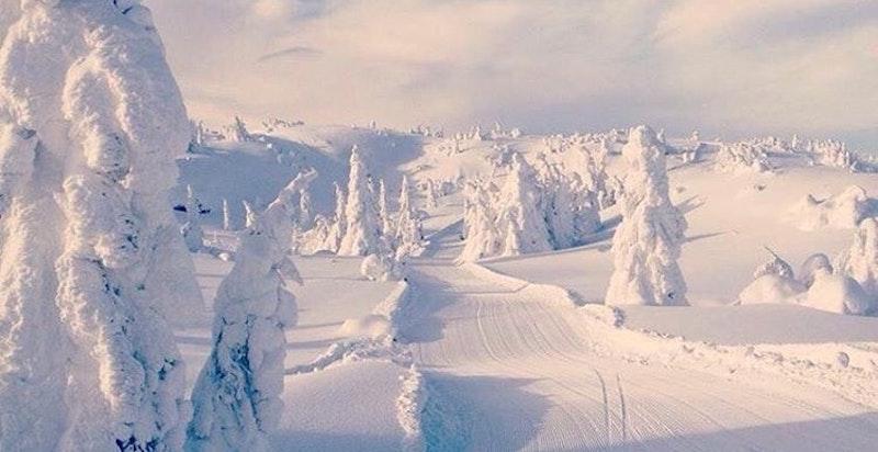 Fantastisk vinterlandskap i området