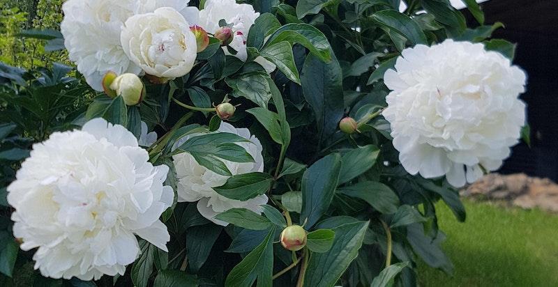 Hagens ulike avdelinger er rikt beplantet med trær, blomster, frukttrær og bærbusker