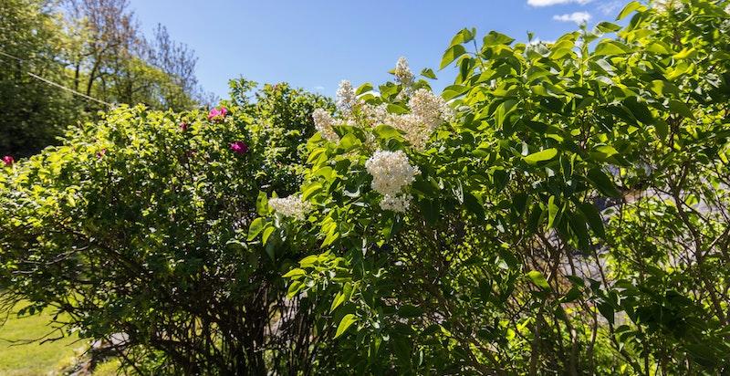 Det er en frodig flora på eiendommen