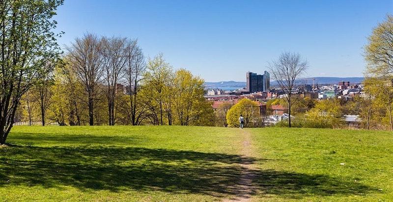 Er du glad i parkliv, er dette rette nabolag for deg. Ensjø vil få hele fem grønne lunger, hvorav Tiedemannsparken med sine 21 mål blir størst.