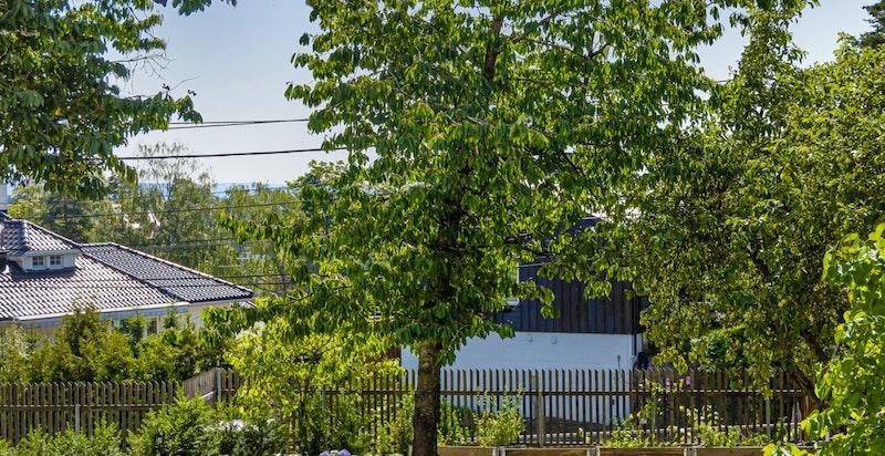 Stor og solrik felles hage med hagemøbler