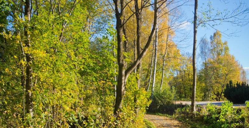 Området har flotte tur og joggemuligheter året rundt.