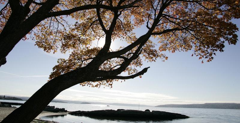 Idylliske Bygdøy kan friste med flere badestrender, turstier og kulturelle opplevelser.