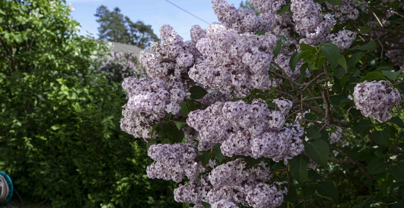 Hagen har mye flott beplantning og fremstår som pent holdt