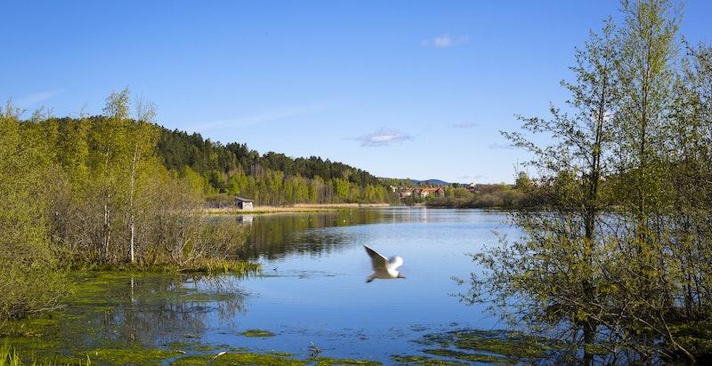 Østensjøvannet med flotte turmuligheter ligger kun 1 km fra boligen.