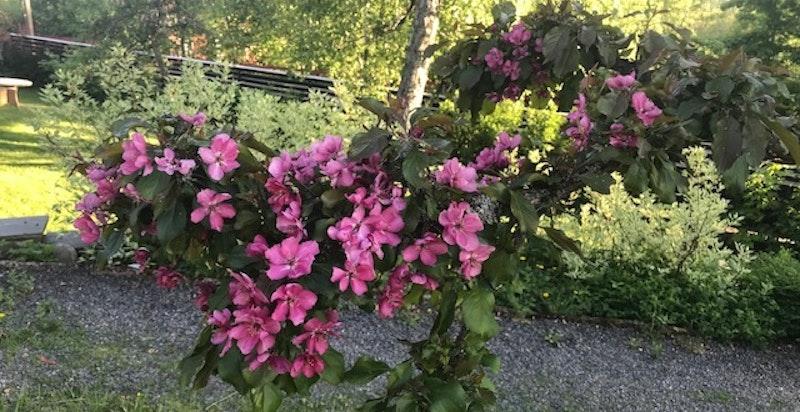 Sommerdetalj fra hage