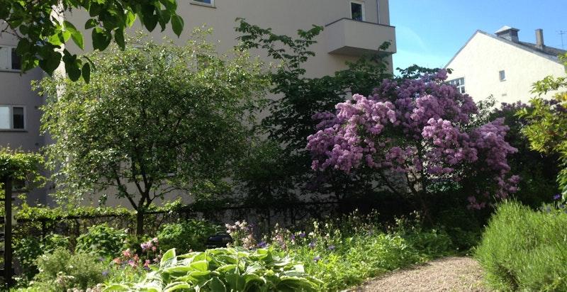 På forsiden av bygget er det en fantastisk frodig og usjenert hage. En perle midt i byen