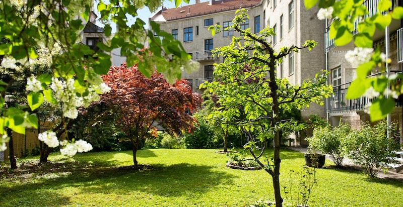 Idyllisk gårdsatrium med plen, prydbusker og trær.