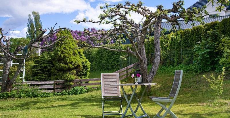 Skjermet inngjerdet hage i rolig villaområde med gode solforhold