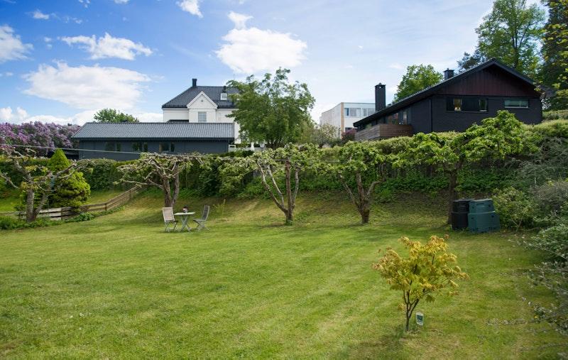 Idyllisk opparbeidet hage med stor plen og epletrær