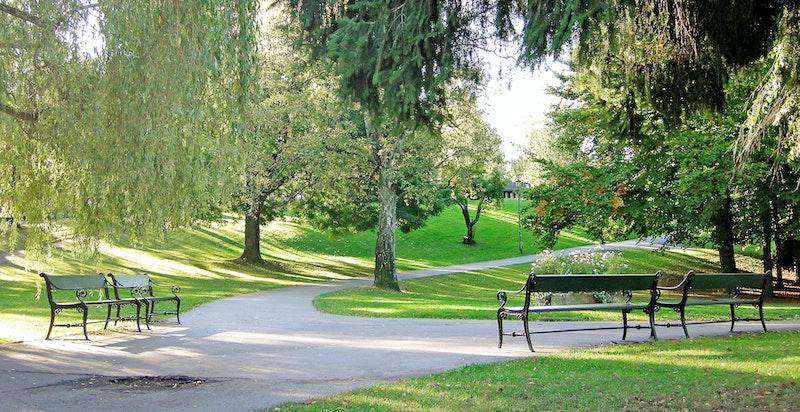 Vakre omgivelser i nærområdet. St.Hanshaugen tilbyr flotte grøntarealer og turmuligheter.