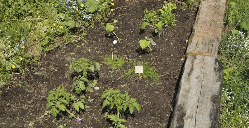 Grønnsakshage med rips- og solbærbusker, i tillegg til mye blåbær på tomten.