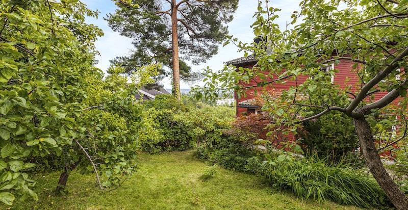 Uteområde/ hage - en rekke frukttrær på eiendommen