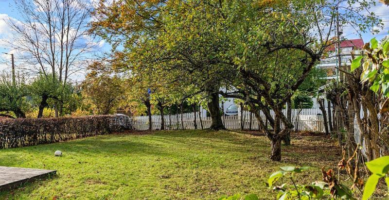 Flat og fin hage innrammet av busker, trær og gjerde