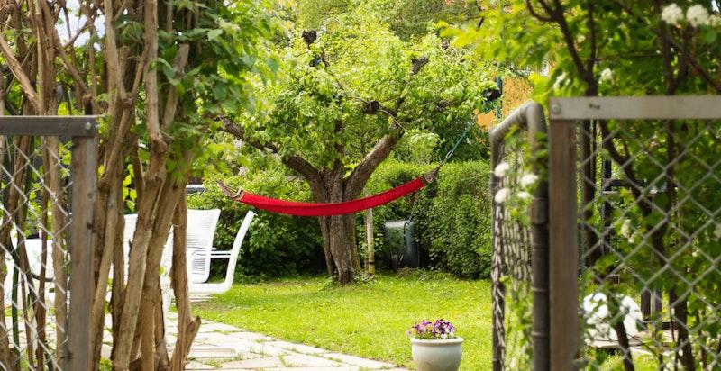 Velkommen inn til din nye hageparsell - en grønn oase i sentrumsnære omgivelser.