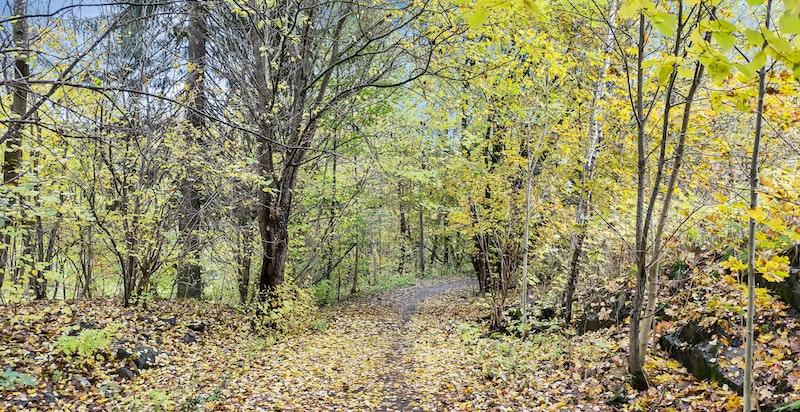 Mærradalen har flotte turområder både sommer og vinter.