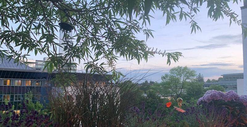 Selger har fått hjelp av landskapsarkitekt til beplantning i plantekassene, dette kommer til sin rett i sommermånedene.