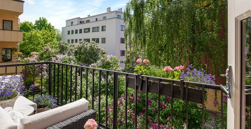 Balkongen med vakre omgivelser - syrintrær i full blomst