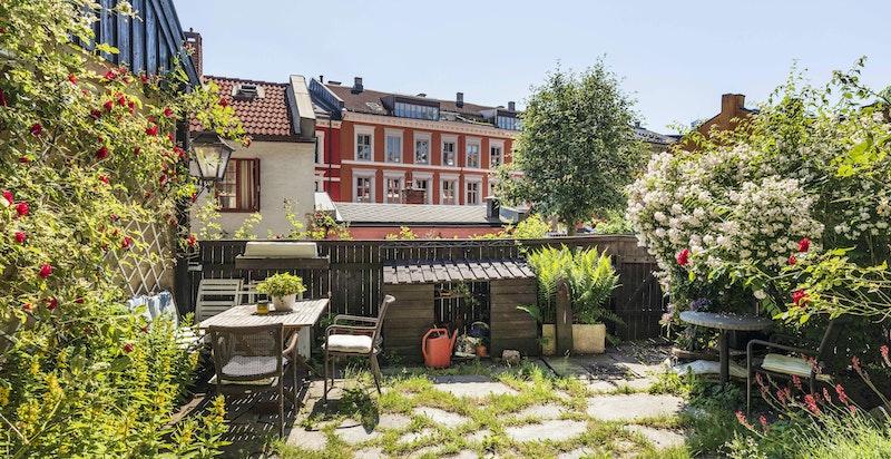 Hagen og huset er omkranset av flotte klatreroser