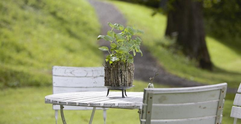 Bilde fra hagen