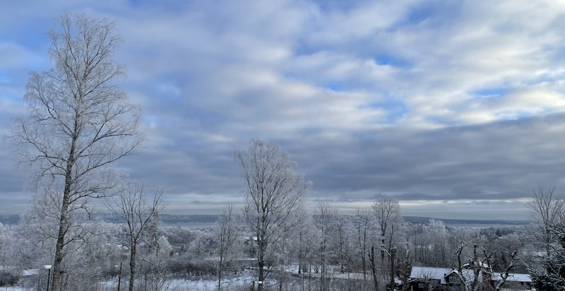 Selgers bilde - vinter