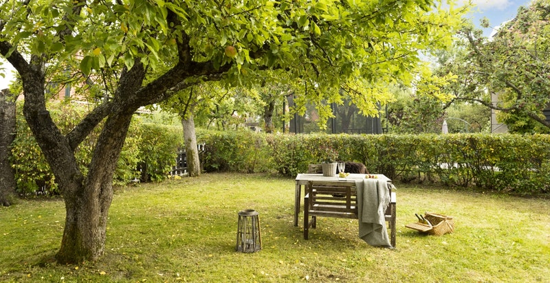 Her er det gode solforhold og boltreplass for hele familien.